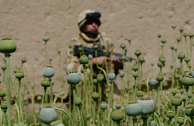 Afghan_opium0430